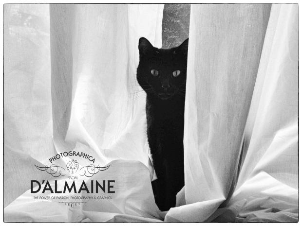 Cat at the Patio Doors